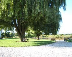 The Two Willows at the entrance.